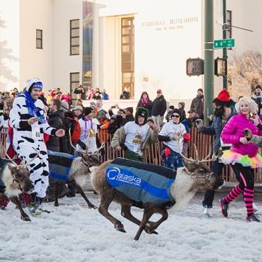 Anchorage Alaska Reindeer Run Savvy Images